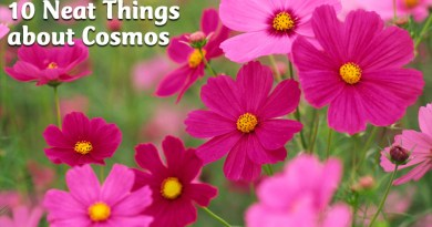 10 Neat Things about cosmos