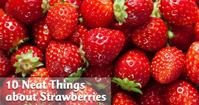 10 neat things about strawberries