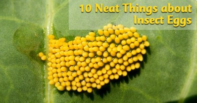 10 neat things about insect eggs