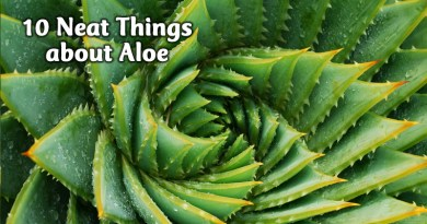 10 neat things about aloe