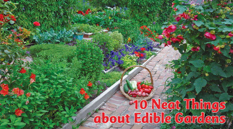 10 neat things about edible gardens