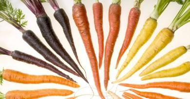 Carrots – Yummy, Crunchy