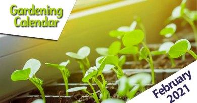 gardening calendar february 2021