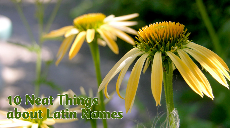 10 neat things about latin names