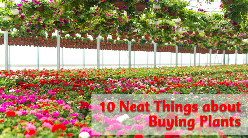 10 neat things about buying plants