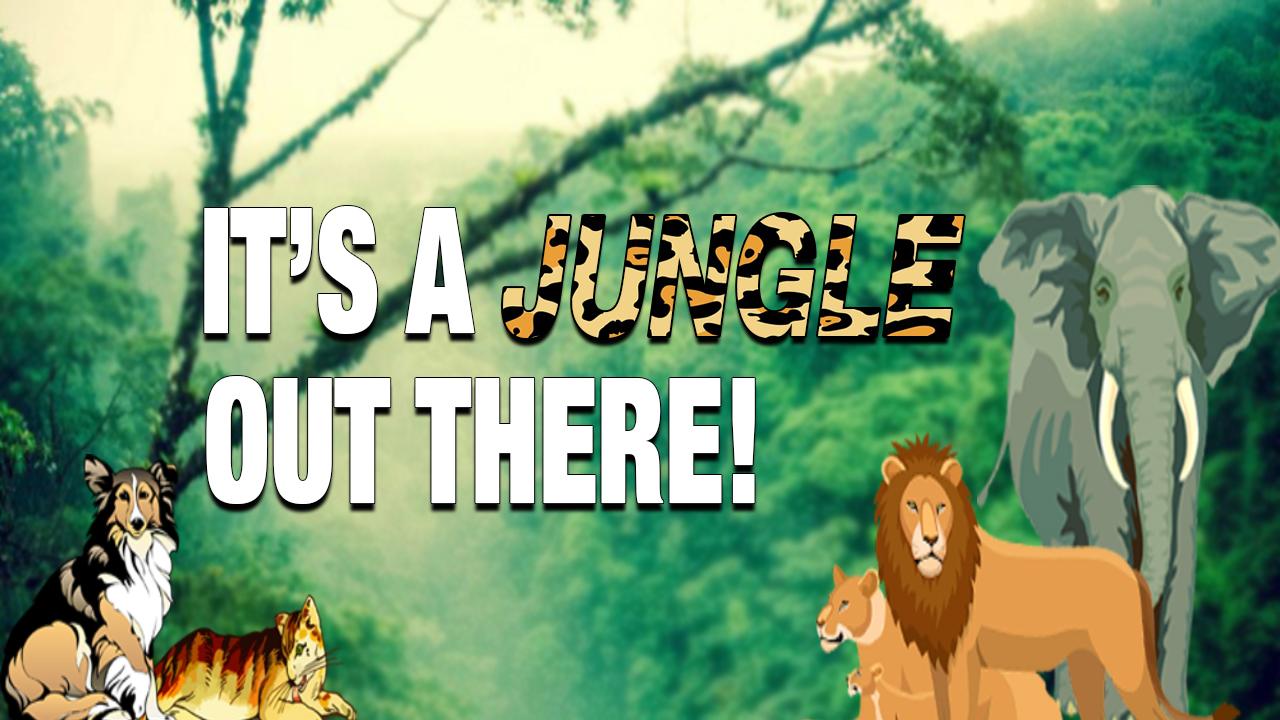 Jungle 1280 720_1507226199099.jpg