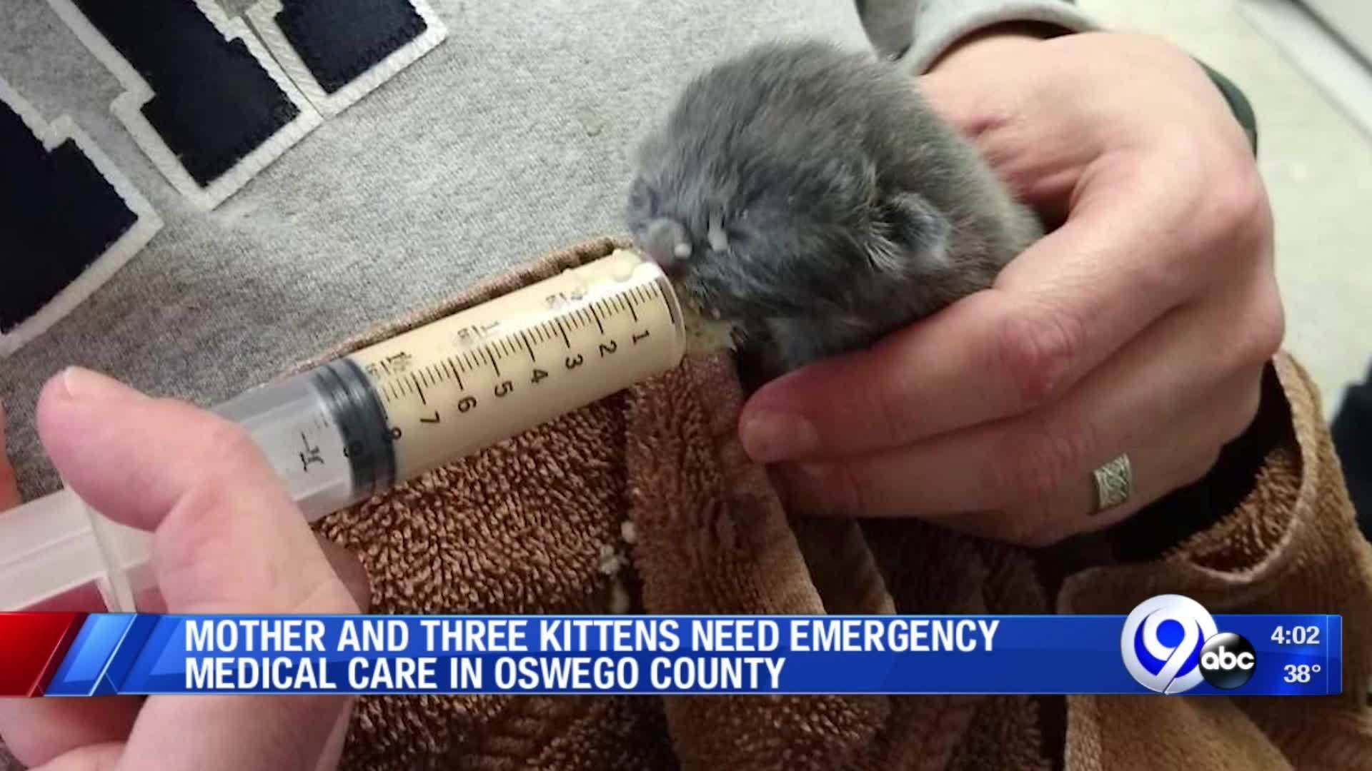 Kittens_surrendered_6_20190326220408
