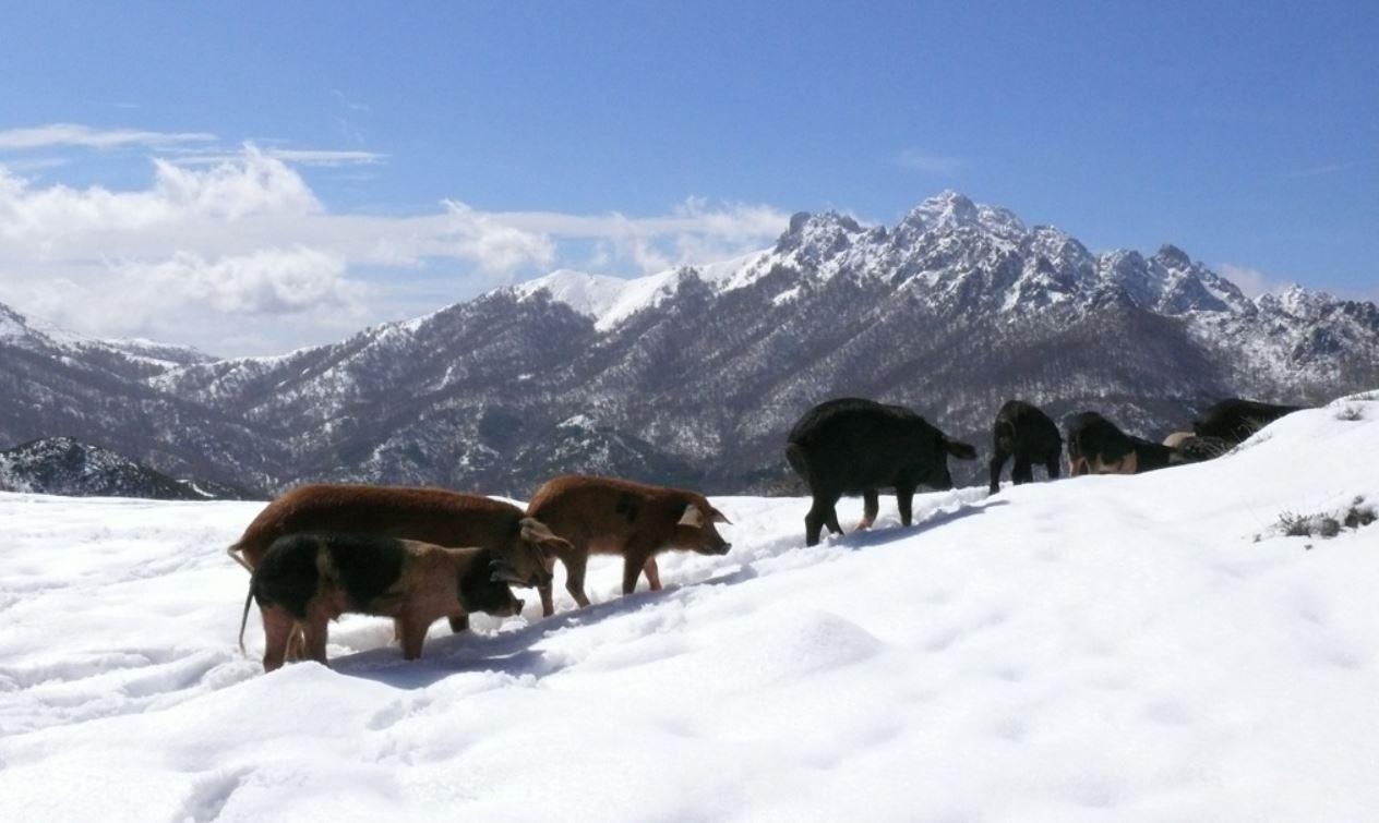 Les Montagnes En Corse La Corse