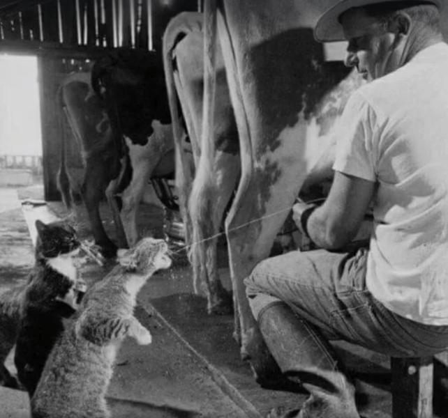 fotografie virala lapte