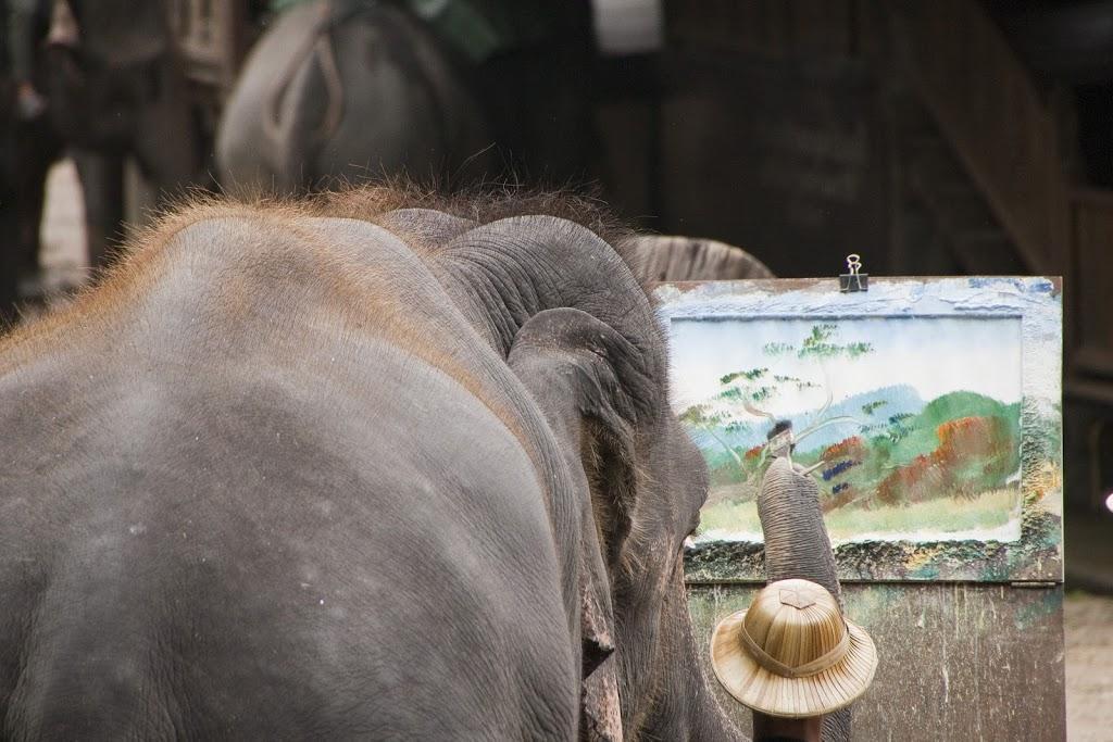 Elefante en Maesa Camp