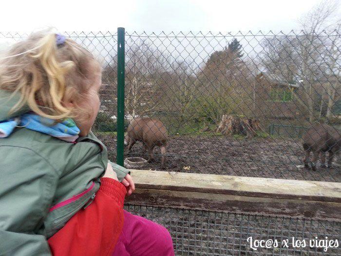 Zoo de Dublín