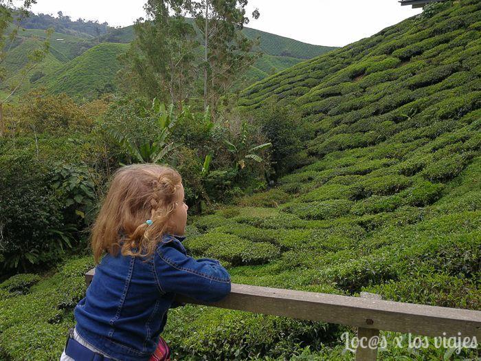 Plantación de té en Cameron Highland