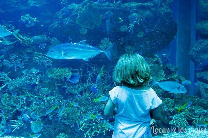 Dubai: Aquarium del Dubai Mall