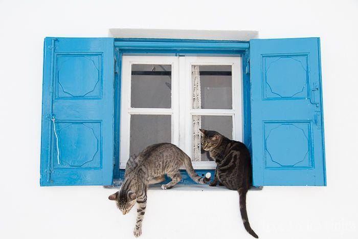 Mikonos en 24 horas: Gatos