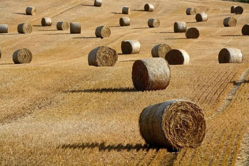 Is your current risk detection system like looking for a needle in a haystack?