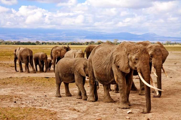 Elephants in Amboseli National Park.gallery_image.3