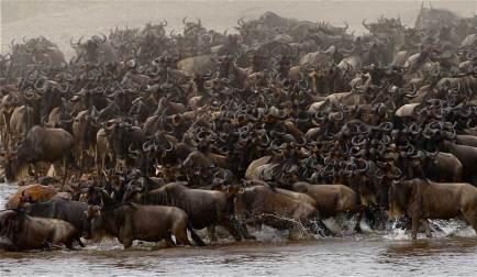 Wildebeest Migration in Serengeti National Park.gallery_image.6