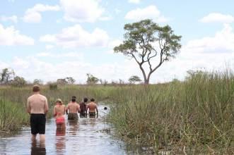 wading in the okavango