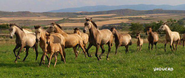 Yeguada Baigorri Salvatierra de Lodosa (Navarra)