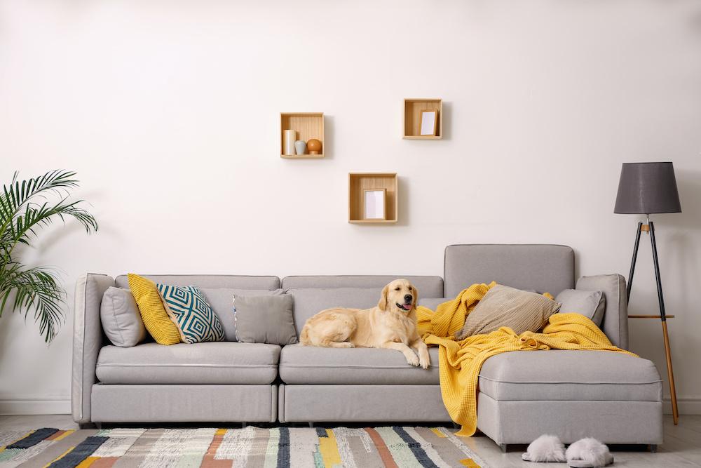 Hund auf Sofa - Tierhaare vom Polstermöbel entfernen - Tipps der Polsterei Löffelsend aus Buchholz im Landkreis Harburg