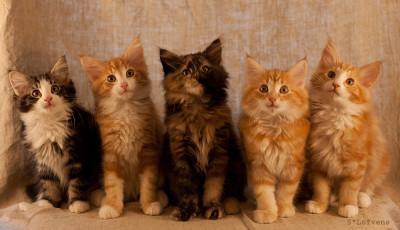 ♥ Kattungarna 11 veckor ♥