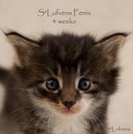 Fenix, 4 weeks, NFO n 09 23