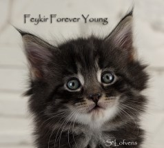 Feykir Forever Young, 6 weeks, NFO ns 23