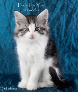 Frida For You, 10 weeks, NFO ns 03 22