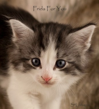 Frida For You, 5 weeks, NFO ns 03 22