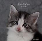 Frida For You, 7 weeks, female, NFO ns 03 22