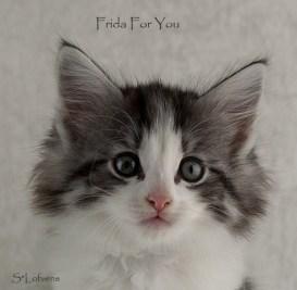 Frida For You, 8 weeks, female, NFO ns 03 22