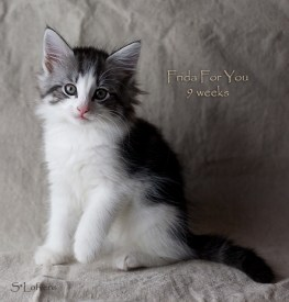 Frida For You, 9 weeks, NFO ns 03 22
