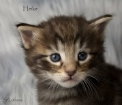 Heike Hidden Treasure, 4 weeks