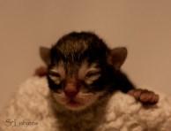Heike Hidden Treasure, NFO n22, newborn