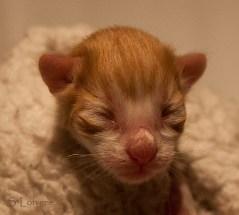 Humle Hot Gossip, NFO d 0922, newborn
