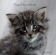 Hugo Heart Stealer, 7 weeks