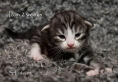 Izon 2 veckor
