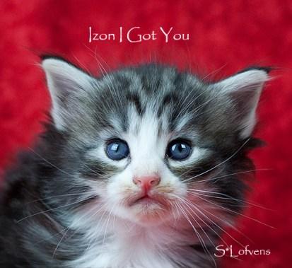 Izon I Got You, 4 weeks, NFO ns 09 22, male
