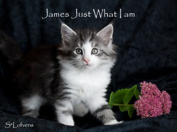 James Just What I am