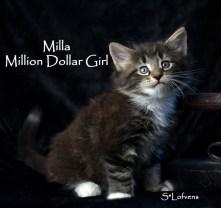 Milla 6 weeks