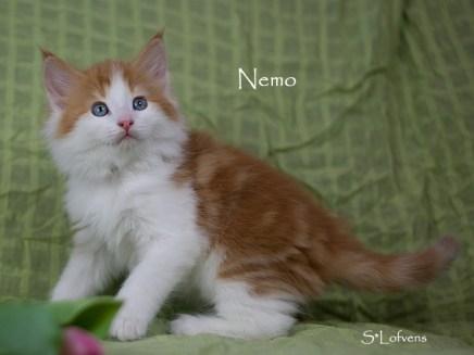 Nemo 7 weeks