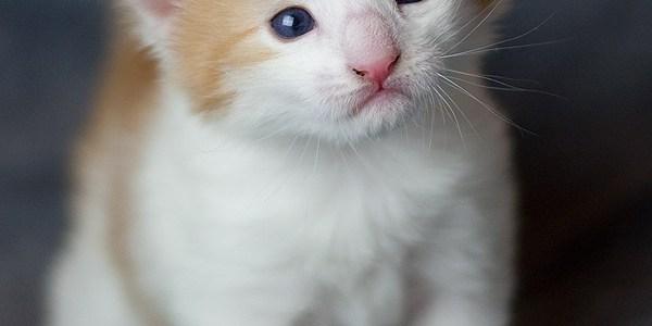 Utforskning av kattunge hagen :-)