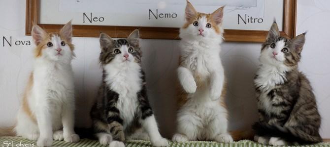 Nemo, Nova, Neo och Nitro har flyttat till sina nya fantastiska familjer