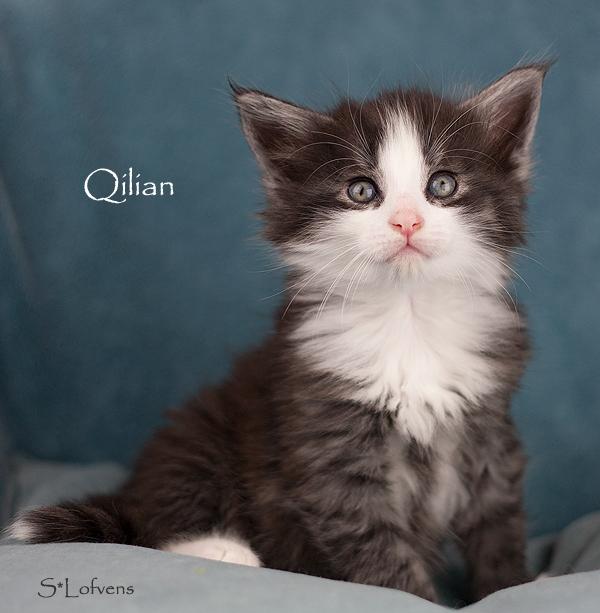 Qilian