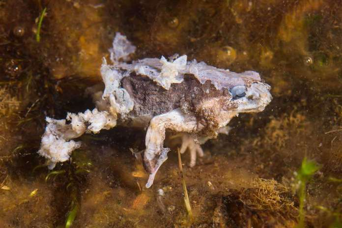 [Science] Nearly 100 species of frogs, toads and salamanders wiped out by fungus – AI