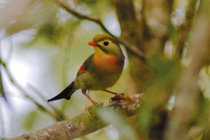 [Science] Birds introduced to Hawaii have evolved rapidly in just decades – AI