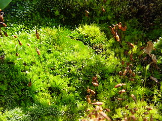 Easy Harmless Ways To Get Rid Of Moss Green Gardening With Ann