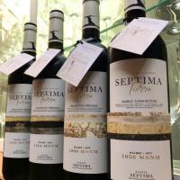 Conociendo Séptima Tierra, la nueva línea de vinos de Bodega Séptima