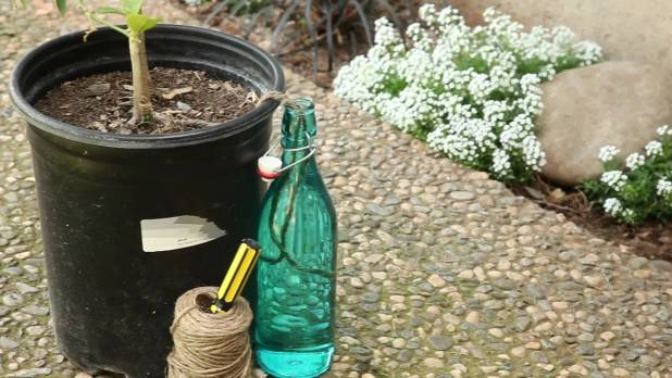 A container water can for your plants