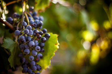 Chemical free wine